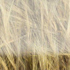 harvest_4949