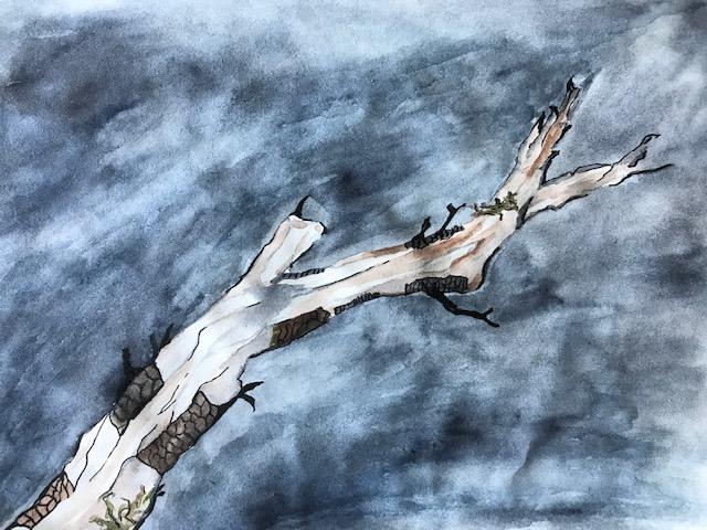 ab branch